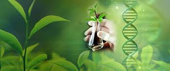 1112432 Biodegradation and Bioremediation